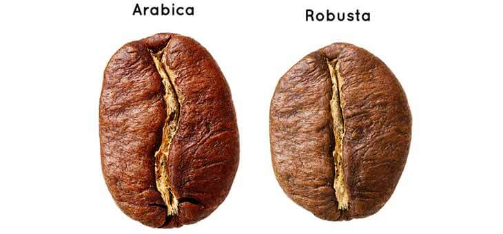 Arabica og Robusta kaffebønner