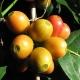 Arcaffe Rigtig Kaffe Vellakadai 500g