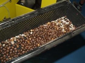 Frasortering af sten og andre ting der ikke høre hjemme i kaffen.