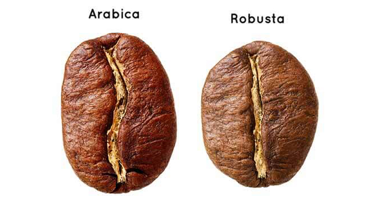 Arabica og Robusta