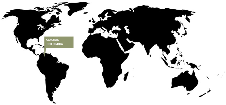 Kort over kaffens oprindelse