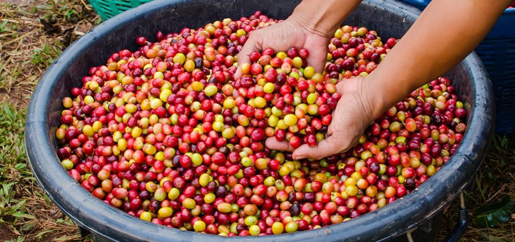 Smagshjul: Sådan smager du kaffe