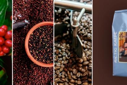 Hvordan bliver kaffen produceret? Fra plante til pose