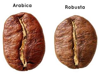 Hvad er forskellen på Arabica og Robusta